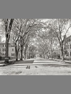 chestnut-street-salem